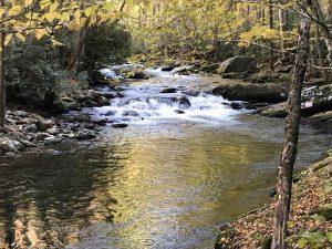 Little River Trail川沿いコース