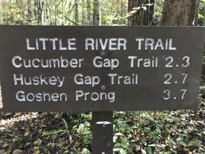 Little River Trailトレッキングコース