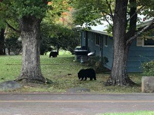 Gatlinburgで熊と遭遇